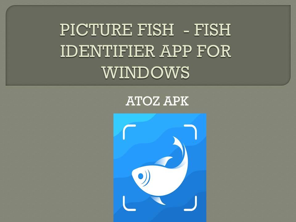 PICTURE FISH - FISH IDENTIFIER APP FOR WINDOWS